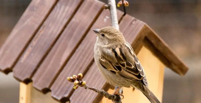 Păsările, de la ziua ornitologilor