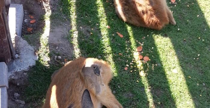 Animale la Moara de Vânt, Cluj, căprioare
