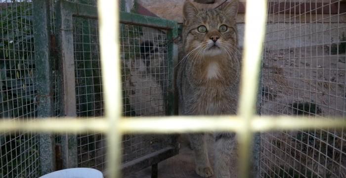 Animale la Moara de Vânt, Cluj, pisică sălbatică