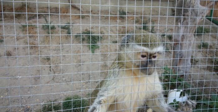 Animale la Moara de Vânt, Cluj, maimuţica Luiza
